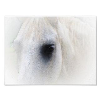 Beautiful Horse Eye Photographic Print
