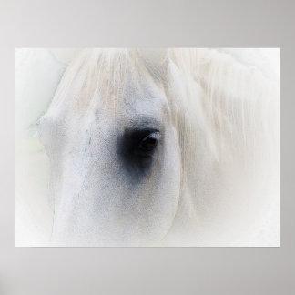 Beautiful Horse Eye Poster
