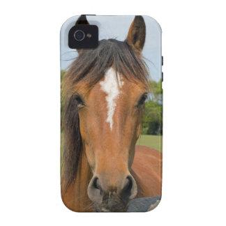 Beautiful horse head chestnut iphone 4 case mate