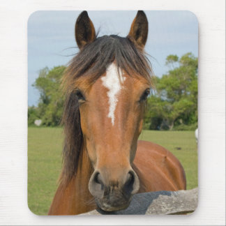 Beautiful horse head chestnut photo mousepad