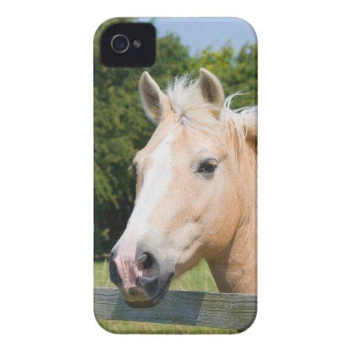 Beautiful horse head palamino blackberry bold case