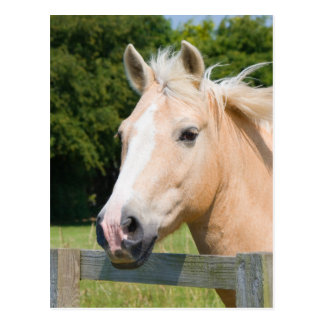 Beautiful horse head palamino photo postcard