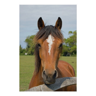 Beautiful horse head photo, poster, print, gift poster