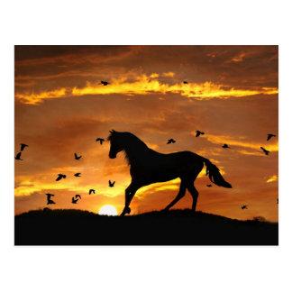 Beautiful Horse in Sunset Postcard