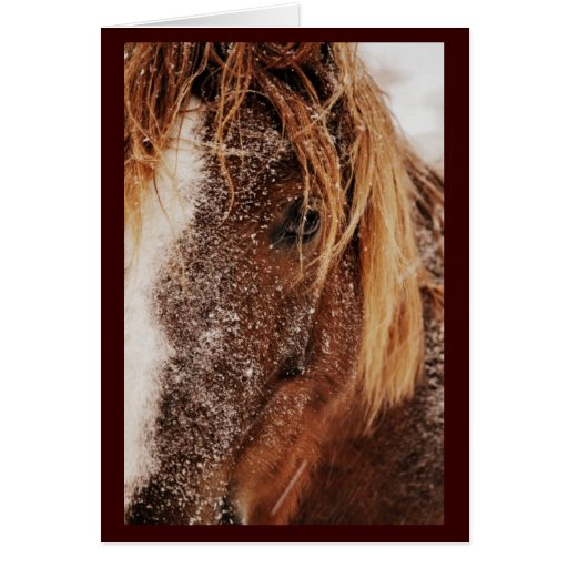 Beautiful Horse on a Snowy Day, Greeting Card