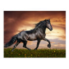 Beautiful Horse Postcard