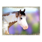 Beautiful Horse Postcards