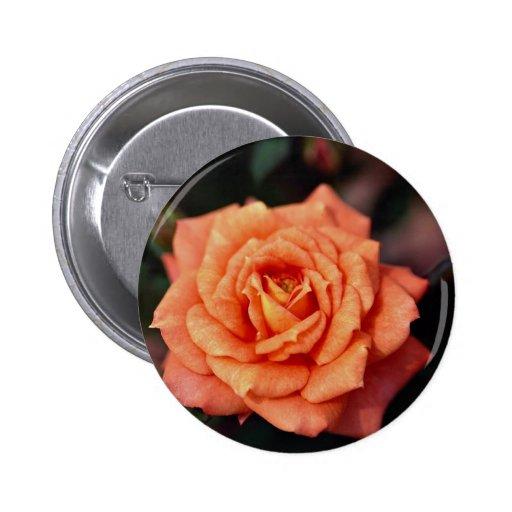 Beautiful Hybrid Tea Rose Pin