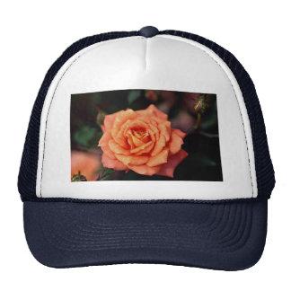Beautiful Hybrid Tea Rose Hat
