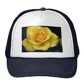 Beautiful Hybrid Tea Rose Hats
