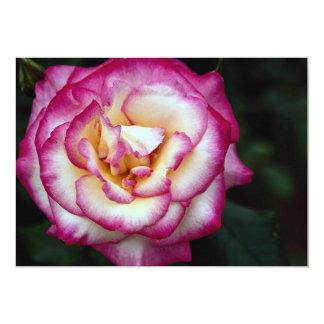 Beautiful Hybrid Tea Rose 13 Cm X 18 Cm Invitation Card