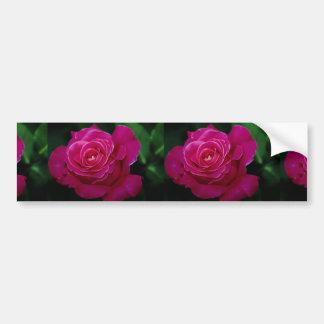 Beautiful Hybrid Tea Rose 'Pink Peace' Bumper Sticker