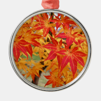 beautiful japanese maple tree in fall Silver-Colored round decoration