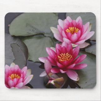 Beautiful lake flowers on mause pad mouse pad