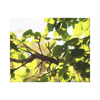 Beautiful Leaves Canvas Stretched Canvas Prints