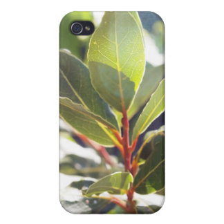 Beautiful Leaves iPhone Case iPhone 4/4S Cover