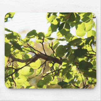 Beautiful Leaves Nature Mousepad
