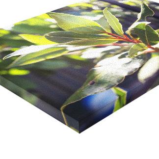 Beautiful Leaves & Sunshine Canvas Canvas Print