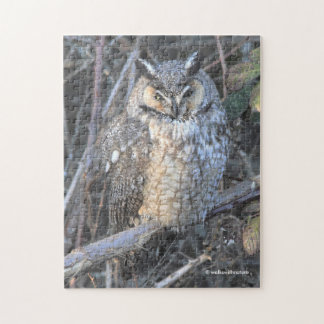Beautiful Long-Eared Owl at Sunset Jigsaw Puzzle