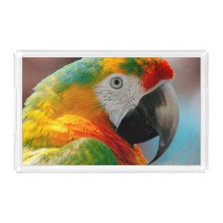Beautiful Macaw
