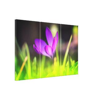 Beautiful, macro Spring crocus premium canvas. Canvas Print
