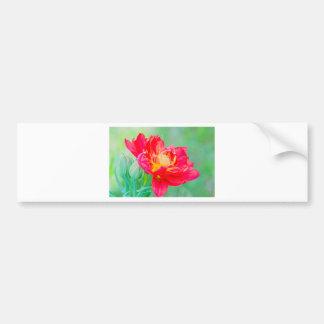 Beautiful macro tulip over green background bumper sticker