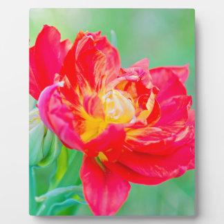 Beautiful macro tulip over green background plaque