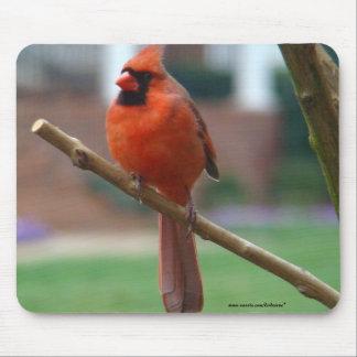Beautiful Male Cardinal Mouse Pad