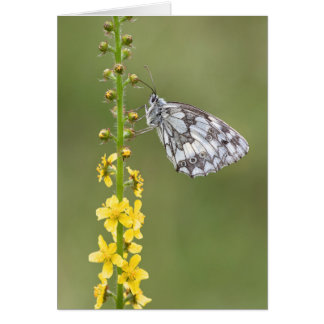 Beautiful Marbled White Butterfly Greeting Card