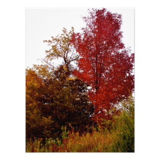 Beautiful Michigan in Autumn Photo Print