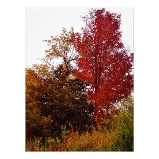 Beautiful Michigan in Autumn Photo Print