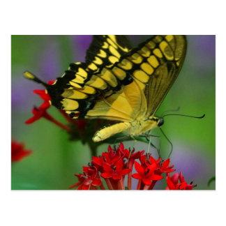 Beautiful Monarch Butterfly Photo Postcard
