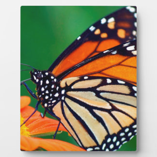 Beautiful Monarch Butterfly Plaque