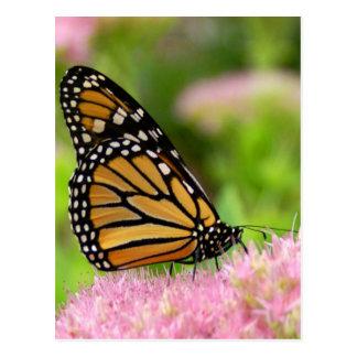 Beautiful Monarch Butterfly Post Card