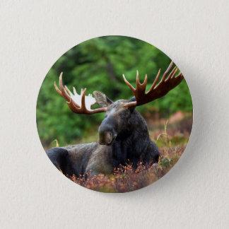 Beautiful moose with big antlers 6 cm round badge