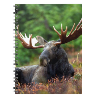 Beautiful moose with big antlers notebook