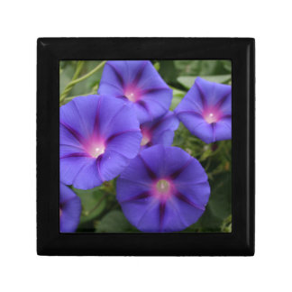 Beautiful Morning Glories in Bloom Gift Box