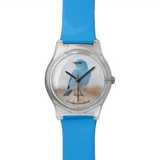 Beautiful Mountain Bluebird on the Beach Watch