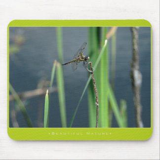 Beautiful Nature: Dragonfly Mouse Pad