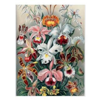 Beautiful Nature - Orchids Postcard