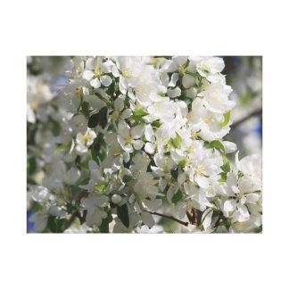Beautiful Nature Photo Of White Apple Blossom Stretched Canvas Print