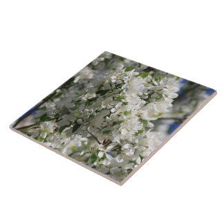 Beautiful Nature Photo Of White Apple Blossom Tiles