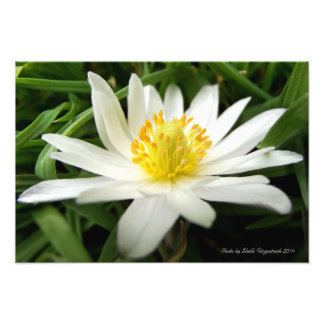 Beautiful Nature Photo of White Wildflower