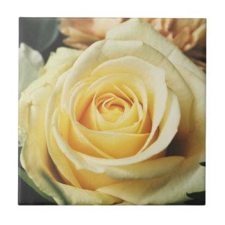 Beautiful Off White Cream Rose Small Square Tile