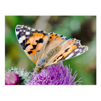 Beautiful Orange and Black Butterfly Postcard