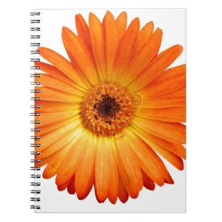 Beautiful Orange and Yellow Gerbera Daisy Note Book