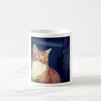 Beautiful Orange Cat Basic White Mug