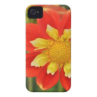 Beautiful orange dahlia print Case-Mate iPhone 4 case