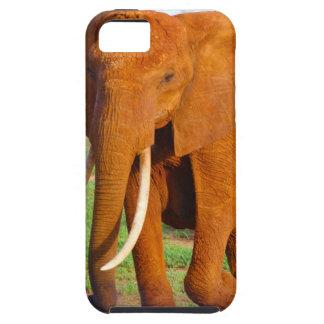 Beautiful Orange Elephant Case For The iPhone 5