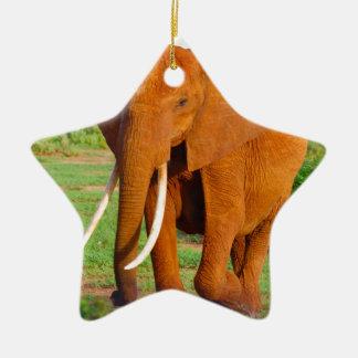 Beautiful Orange Elephant Ceramic Star Decoration